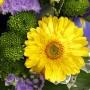 """Bouquet """"CLAIR DE LUNE"""" • Jaune & Violet"""