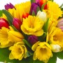 Bouquet Tulipes & Jonquilles