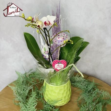 """Orchidée Phalaenopsis dans son pot """"Exquise Orchys"""""""
