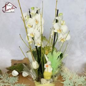 Orchidée blanche de Pâques