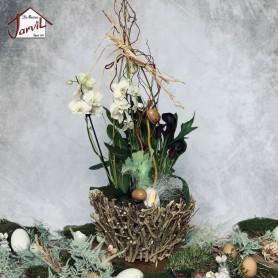 Grandes Orchidées Blanche de Pâques