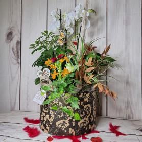 La Boîte à Chapeau , garnie de Plantes raffinées !