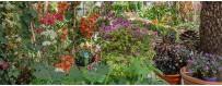 Les plantes vertes ou fleuries