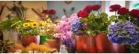Les fleurs coupées