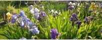Les Jardins de Plantes