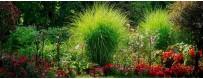 Les plantes et arbustes